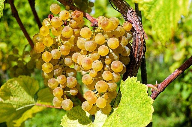 grapes-2715711_640