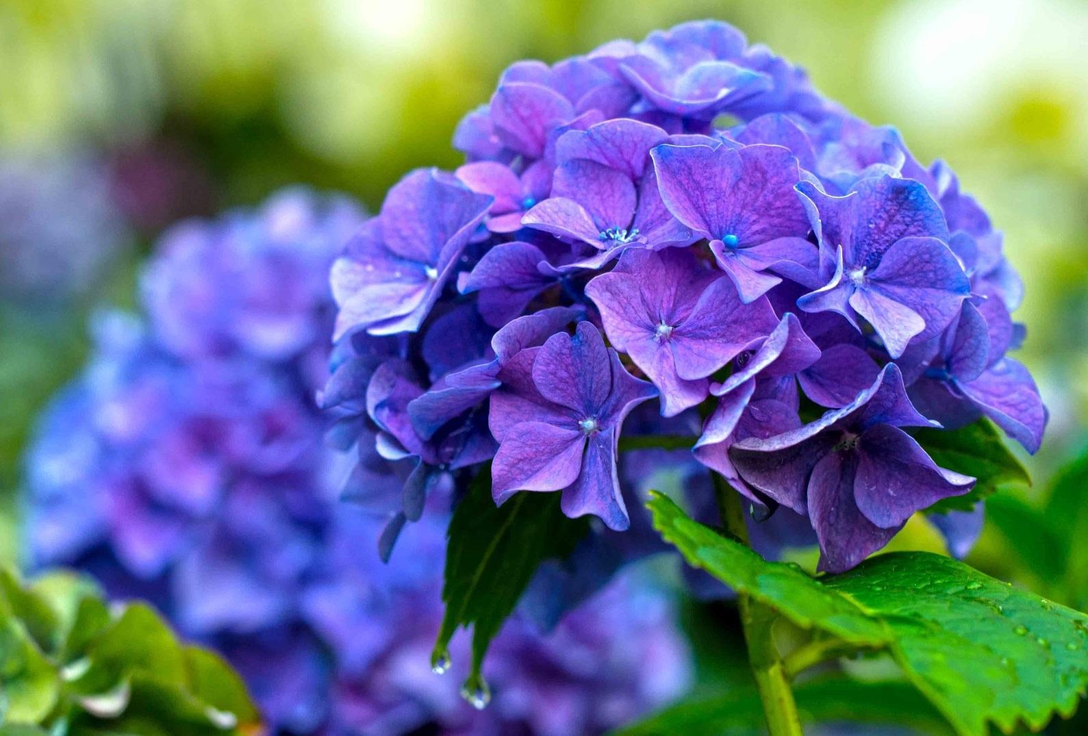 flower-1369419_1920