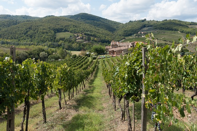 winegrowing-972870_640