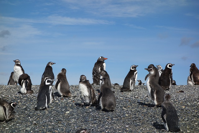 penguins-5429388_640