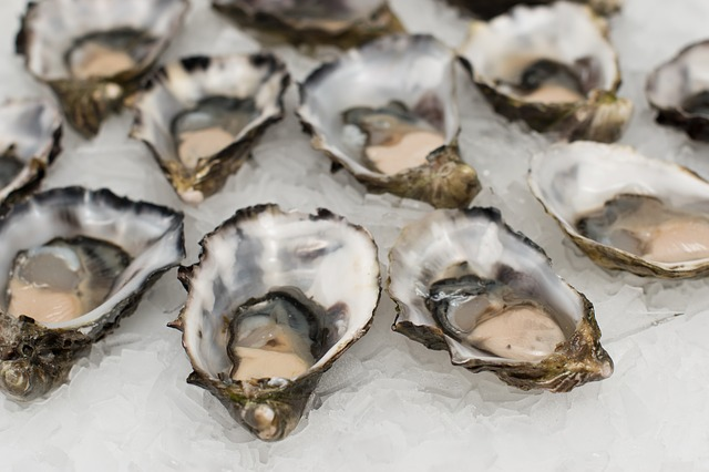 oysters-2220607_640