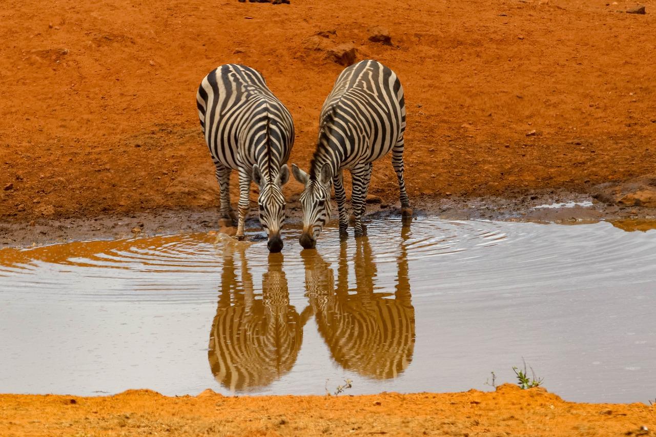 africa-4045665_1280