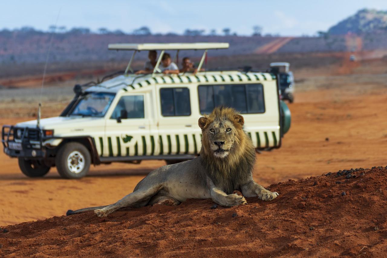 lion-3940977_1280