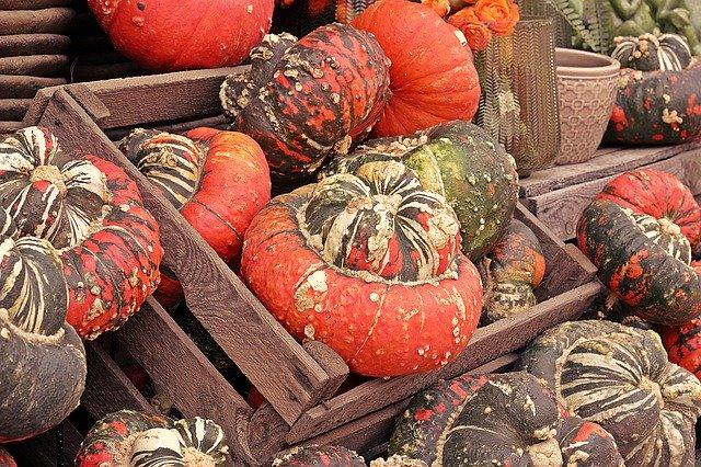 pumpkin-4465394_640