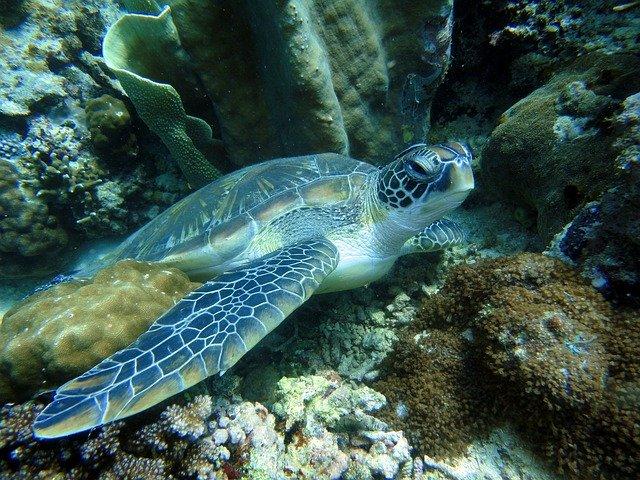 turtle-322416_640